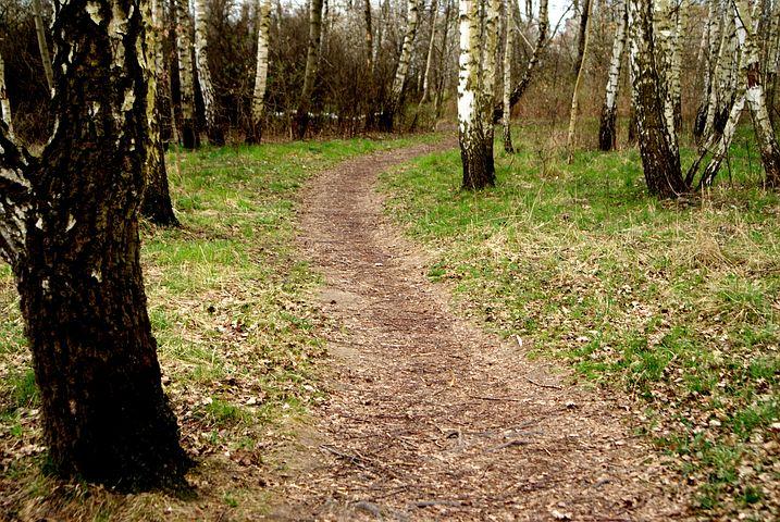 Way, Trodden, Spring, Landscape, Murals, Foto