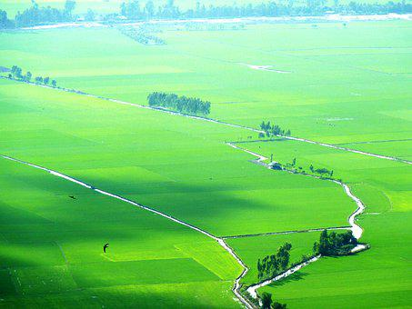 Paddy, Green, Picturesque, Vietnam, Landscape, Nature