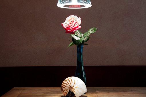 Still Life, Vase, Nautilus, Table, Rose, Pendant Lamp
