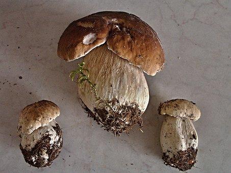 Mushroom Right, Mushrooms, Fungus, Unadjusted, Boletus