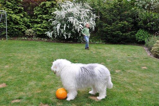 Dog, Ball, Young Dog, Bobtail, Child, Young, Boy
