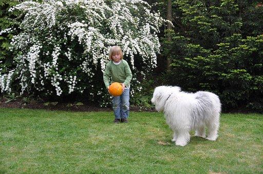Ball, Dog, Boy, Play, Shoot, Bobtail, Child, Young