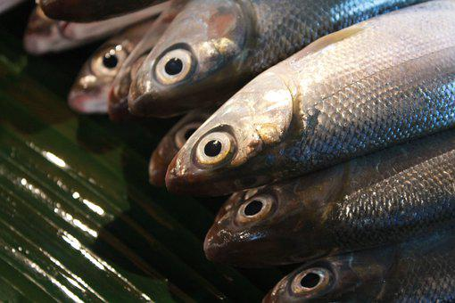 Fish, Food, Dairy, Supermarket, Delicious, Breakfast