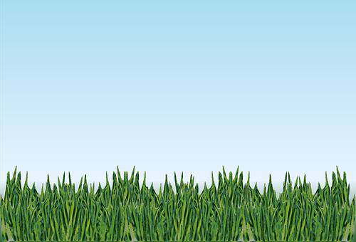 Grass, Landscape, Meadow, Plants, Frog's-eye-view