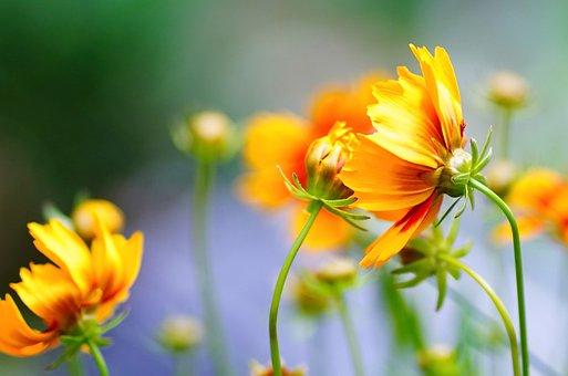 Flower, Blossom, Bloom, Yellow, Bright, Beauty, Garden