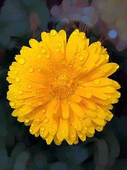 Chamanti Flower, Chamanti, Petals, Flower
