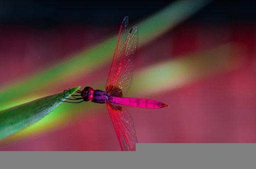 Dragonfly, Insert, Green, Wildlife, Wings
