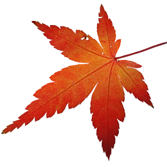 Leaf, Maple Tree, Foliage, Garden, Nature, Colorful
