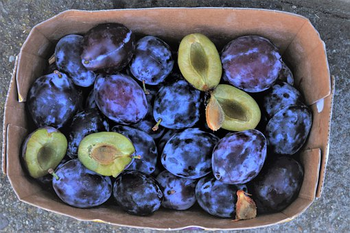 Plum, Fruit, Tasty, Nutrition, Violet, Juicy, Mature