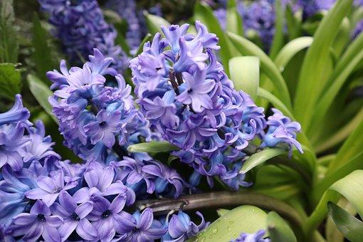 Plants, Flower, Bloom, Garden, Blossom, Lavender