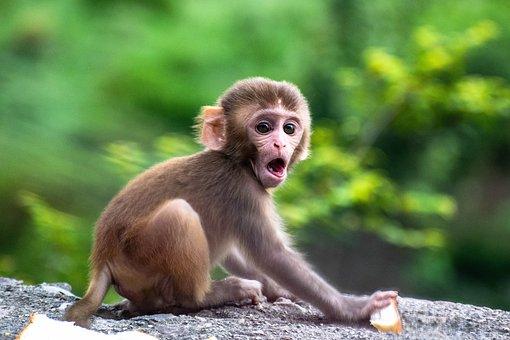Cute, Monkey, Baby, Animal, Mammal, Monkeys, Nature