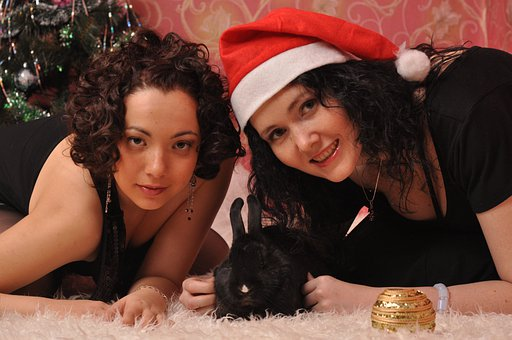 New Year's Eve, Christmas, Friends, Rabbit, Holiday