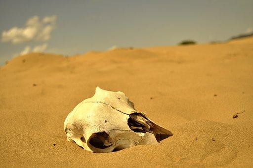 Desert, Skull, Hot, Death, Bone, Sand, Head, Mongolia
