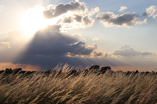 Meadow, Field, Sunbeam, Sunshine, Nature, Landscape