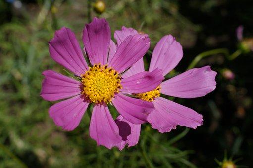 Flowers, Pink, Flora, Garden, Forest, Wild, Close Up