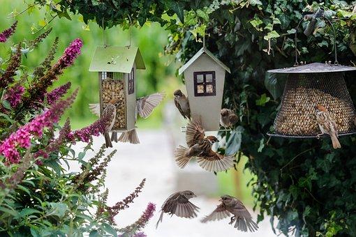 Sparrows, Food, Bird, Feather, Plumage, Feeder, Garden
