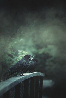 Bridge, Fog, Raven, Forest, Book Cover, Mood