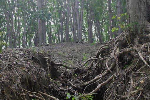 Erosion, Forest, Green, Environment, Leaf, Foliage