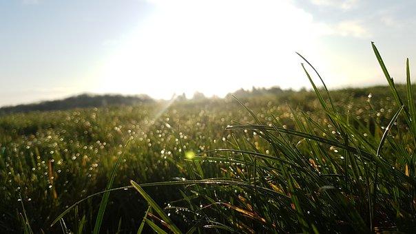 Meadow, Dew, Morgenstimmung, Nature, Grass, Dewdrop