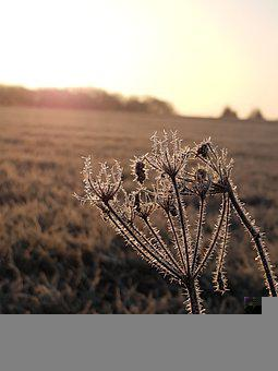 Frost, Meadow, Icy, Morgenstimmung, Ripe, Ice, Frozen