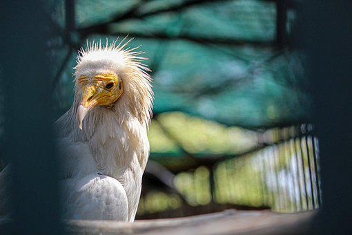 Bird, Peacock, Zoo, Parrot, Nature, Animal, Hornbill