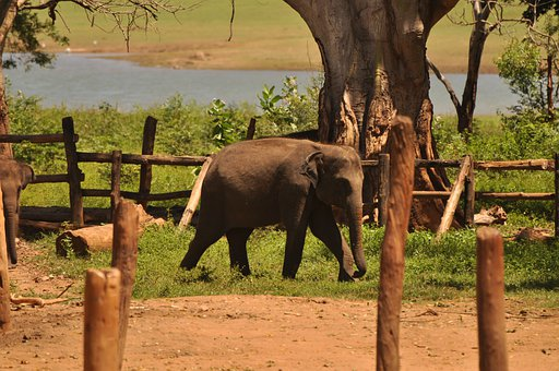Elephant, Nature, Animal, Wilderness, Wild, River