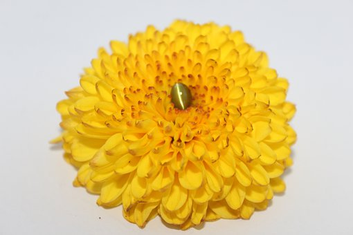 Cats Eye Gemstone, Gem, Yellow, Flower, Nature