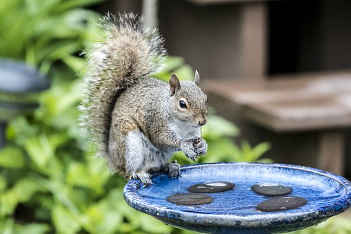 Squirrel, Water, Bath, Animal, Eat, Thirsty