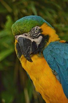 Parrot, Bird, Wildlife, Nature, Beak, Avian, Feathers