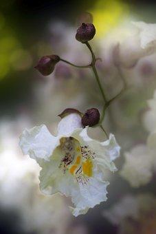 Flower, Nature, Garden, Summer, Floral, Color, Macro