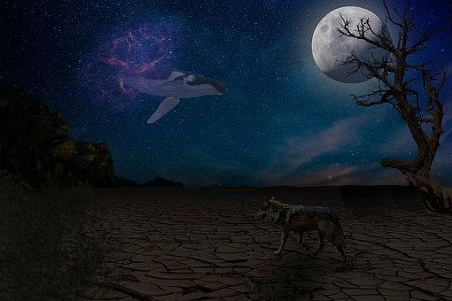 Whale, Wolf, Desert, Sky, Moon, Tree, Night, Horizon