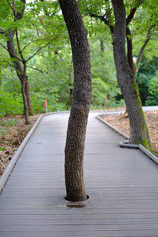 Wooden Path, Trees, Nature, Forest, Landscape, Mountain