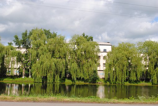 Lake, Jails, Willow, Nature, Park, Spring, Mood, Colony