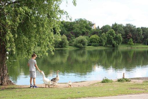 Bucharest, Park, Child, Animal, Duck, Lake, Water
