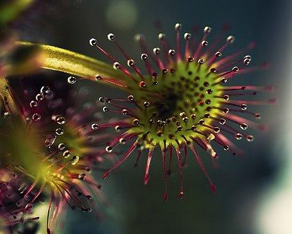 Plant, Flowers, Nature, Vegetation, Beautiful, Leaves