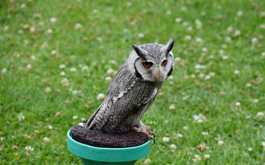 Owl, Bird, Feather, Perched, Cute, Nature, Plumage