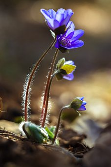 Spring, Flowers, Purple, Beauty, Life, Nature, Color