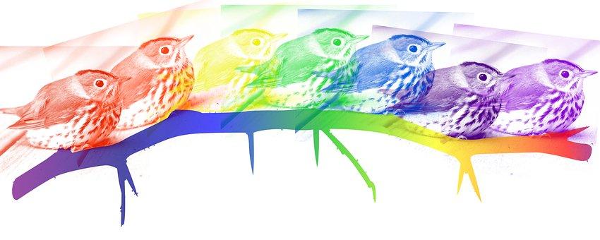 Ovenbird, Bird, Avian, Rainbow, Beauty, Colors, Branch