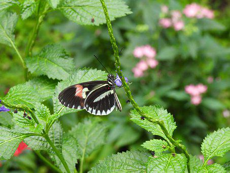 Butterfly, Insect, Nature, Macro, Background, Summer