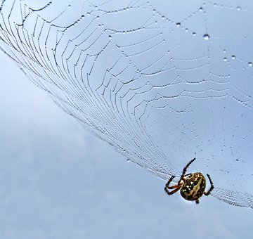 Spider, Cobweb, Insect, Sky, Dew, Dewdrop, Moist