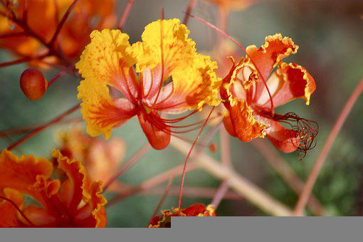 Flower, Plant, Nature, Blossom, Green, Garden, Bloom