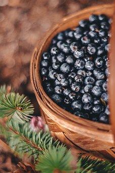 Berries, Basket, Blueberries, Ripe, Fruits