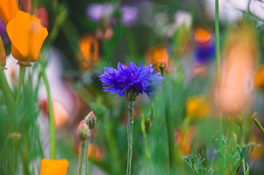 Flower Meadow, Purple, Yellow, Nature, Summer, Flora