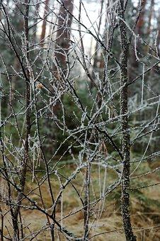 Rime, Branches, Birch, Tree, Wood, Autumn, Finnish