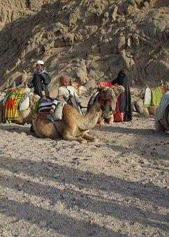 Desert, Mountain, Baby, Egypt, Hot, Hurghada, Camel
