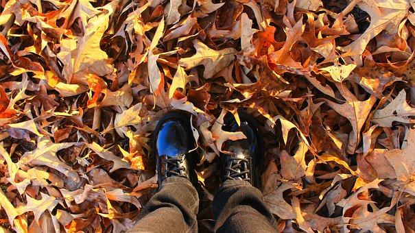 Autumn, Season, Cold, Yellow, Natural, Fall Background