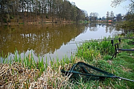 Fishing, Pond, Reflection, Surface, Edge Of The Pond