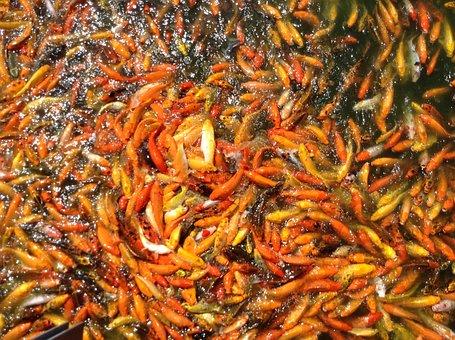Koi Fish, Pond, Fish, Koi, Water, Japanese, Asian