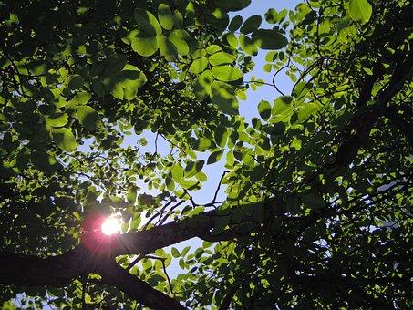 Tree, Leaves, Shadow, Summer, Light, Sunbeam, Branch