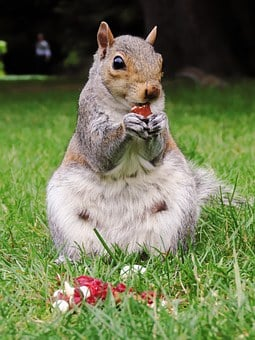 Squirrel, Animal, Mammal, Nature, Cute, Wildlife